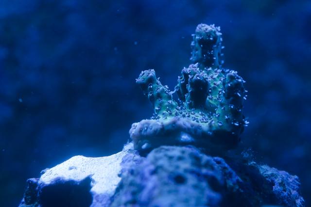 Coral-17.jpg