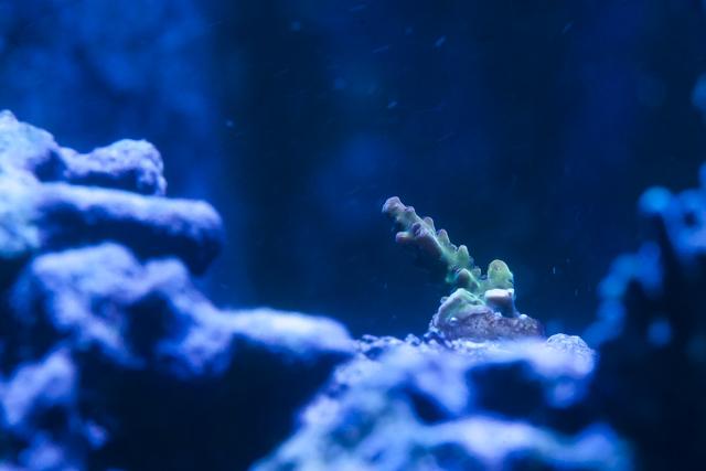 Coral-18.jpg