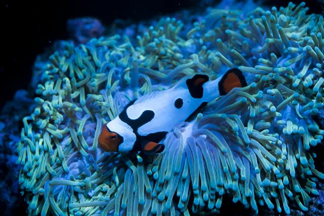 Coral-26.jpg