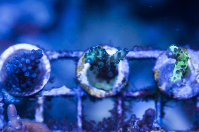 Coral-6.jpg