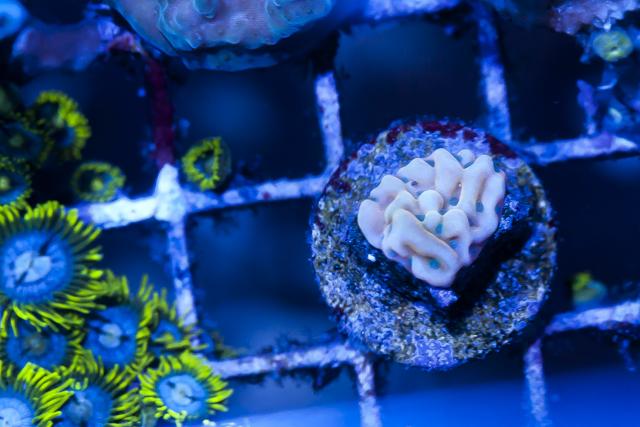 Coral-9.jpg