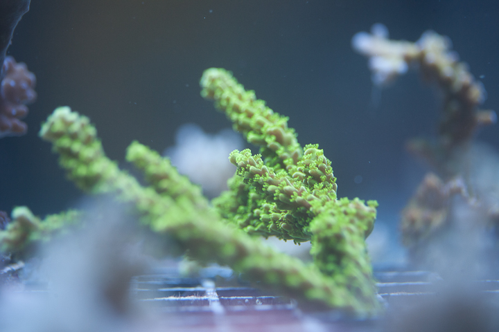 CoralPhoto-3.jpg