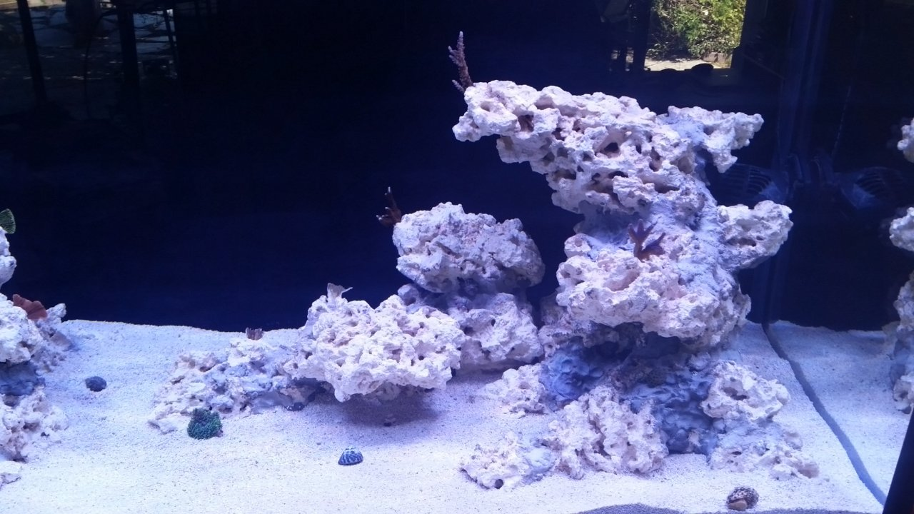 First corals right rocks.jpg