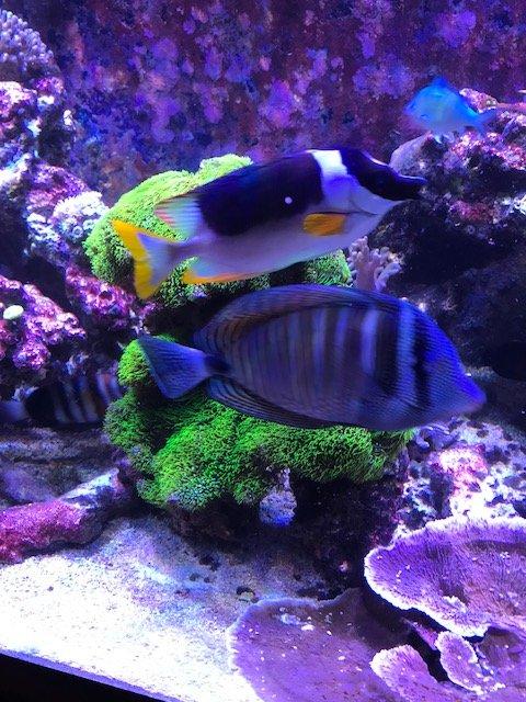 fish_gsp.JPG