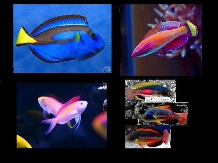 fishpoll.jpg