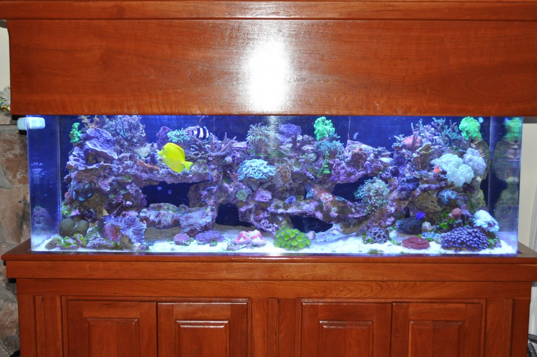 Good Fish Tank Photo.JPG