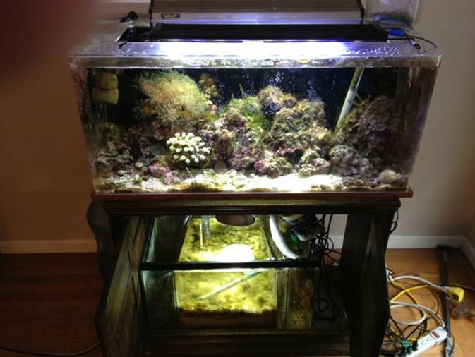 old tank picture.jpg