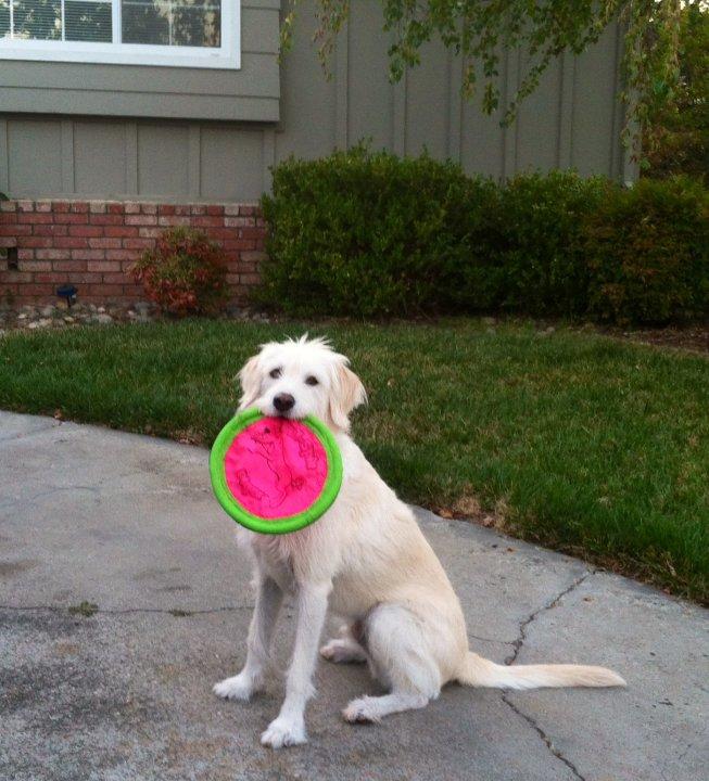 Walter frisbee.JPG