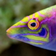 SoulFish